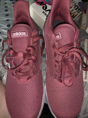 Adidas Basket à lacet bordeau-blanc