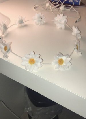 Ribbon white-primrose