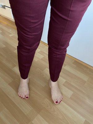 Calliope Pantalone chino bordeaux