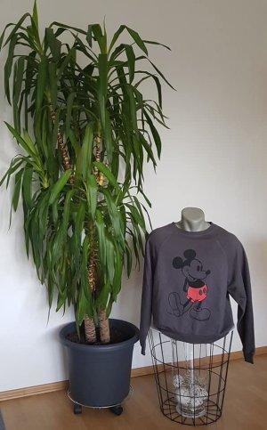 Pullover ,,Mickey Mouse Größe 36-S,,Größe 36