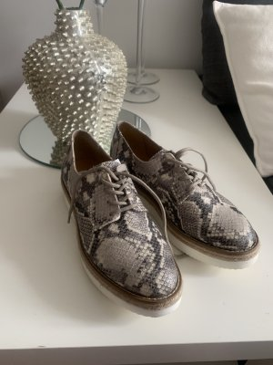 Steve Madden Wingtip Shoes multicolored