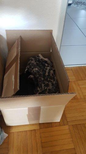 Überraschungs Pakete