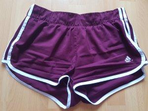 Adidas Sport Shorts white-bordeaux