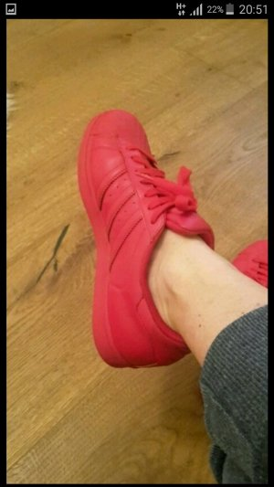 Adidas Superstar in rot