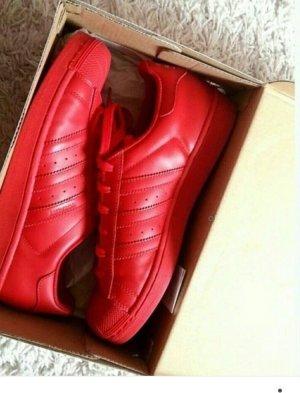 Adidas Superstar Rot in der Größe 38
