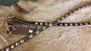 Hellbrauner Ledergürtel mit Goldnieten von Matthew Verve