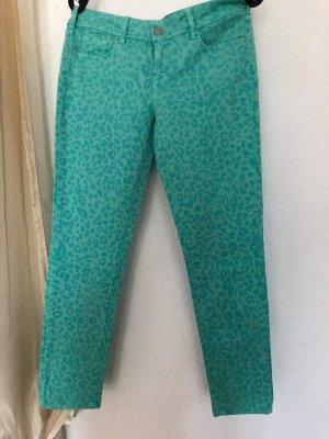 Cimarron Low Rise Jeans turquoise