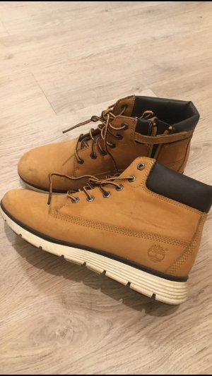Timberland Low boot multicolore